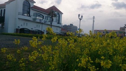 菜の花駅2